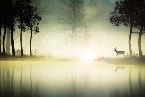 river deer environment animals landscape nature
