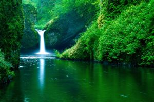 river nature plants landscape waterfall green water forest