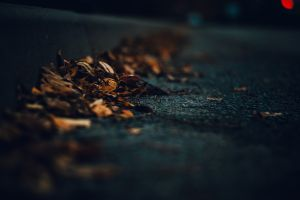 road dark leaves macro