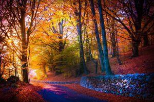road fall trees