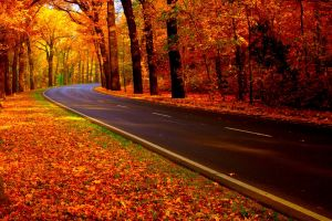 road forest fall nature