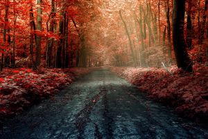 road trees fall forest