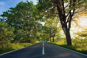 road trees sunlight