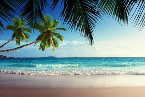 sand beach sky tropical horizon palm trees