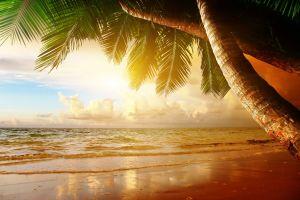 sand clouds sunlight horizon beach tropical palm trees sky