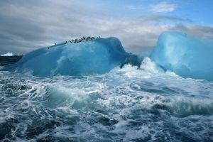 sea antarctica iceberg animals nature penguins cyan ice
