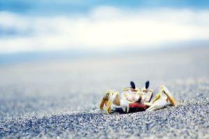 sea crabs sand crustaceans