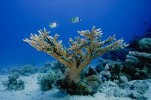 sea life underwater animals sea fish