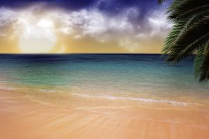 sea palm trees beach sand sky