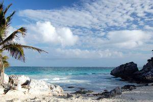 sea palm trees beach sky clouds