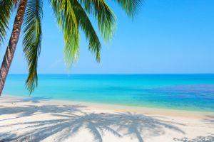 sea palm trees horizon beach