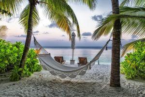 sea palm trees landscape beach tropical hammocks