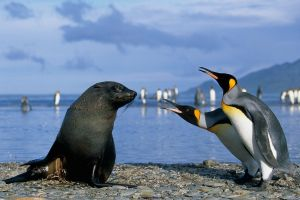 seals animals birds penguins sea