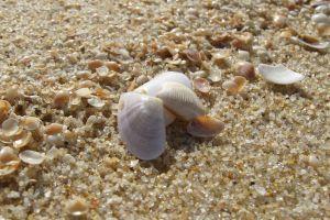 seashells macro nature sand