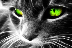 selective coloring cats digital art animals green eyes fractalius