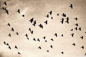 sepia animals sky birds