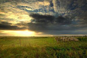 sheep sunlight nature animals sky sunset clouds landscape