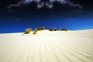 shrubs sand nature landscape desert