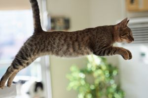 side view cats jumping animals