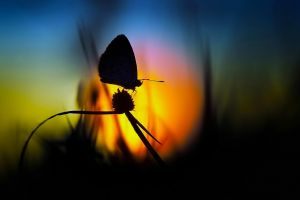 silhouette nature butterfly blurred