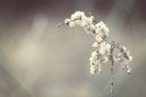 simple background macro blurred plants nature