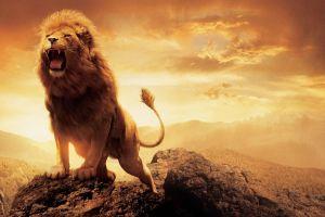 sky artwork lion animals