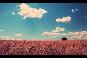 sky clouds wheat landscape