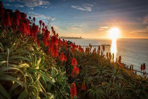 sky flowers usa sunlight sea