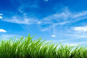 sky grass nature landscape