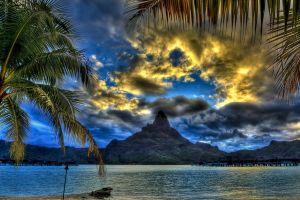 sky palm trees clouds sea