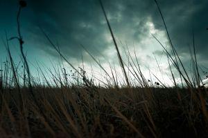 sky plants clouds