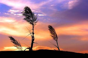 sky plants sunlight sunset landscape grass clouds