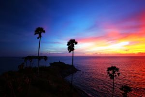 sky sea horizon palm trees nature landscape sunset silhouette sunlight island
