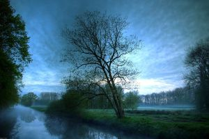 sky water trees landscape morning forest mist nature river