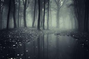 smoke wood nature oak trees landscape forest
