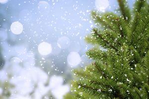 snow flakes trees nature