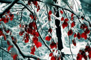 snow trees leaves