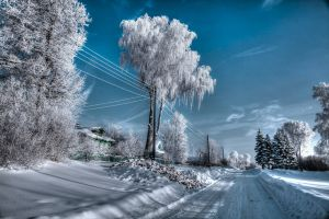 snow winter outdoors russia trees