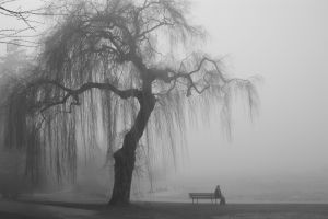 solice nature bench monochrome mist trees alone people landscape men