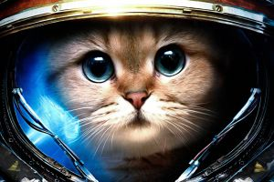 space starcraft james raynor starcraft ii cats humor astronaut