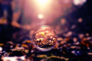 sphere bubbles blurred depth of field nature bokeh digital art macro plants photo manipulation