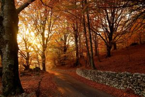 stone wall forest road nature fall rocks
