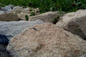 stones nature macro
