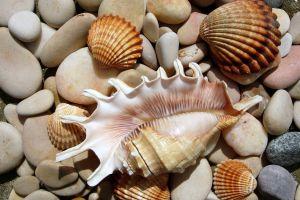 stones seashell seashells