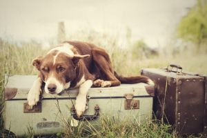 suitcase animals outdoors grass dog