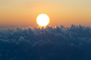 sun nature bokeh frost winter macro