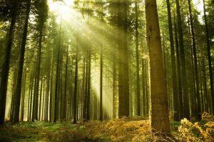 sun rays landscape nature forest
