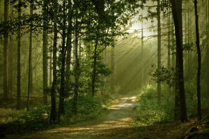 sun rays trees dirt road path nature landscape anime forest anime