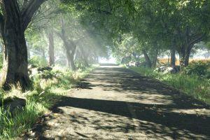 sun rays trees shadow