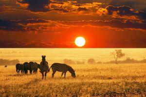 sun sunset africa nature photography zebras landscape sky savannah animals